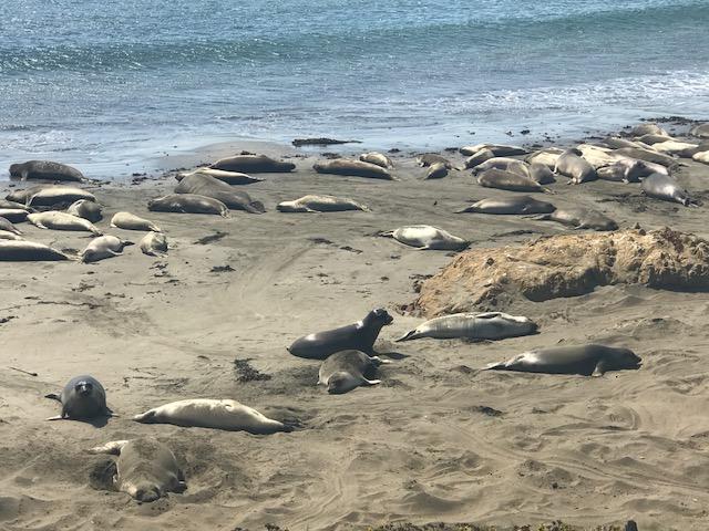currently crushing, hearst castle tour, san simeon travel, california elephant seals